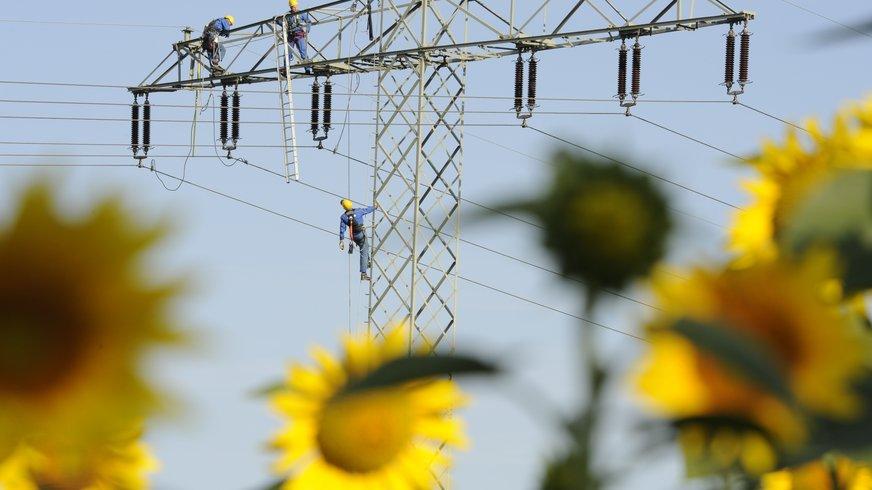 Strommasten mit Sonnenblumen